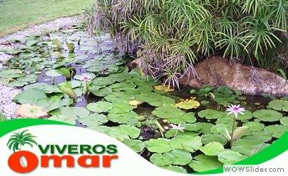 Jardines en acapulco viveros en acapulco for Vivero online mexico