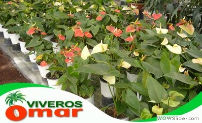 Plantas por mayoreo en acapulco viveros en acapulco for Viveros forestales en colombia