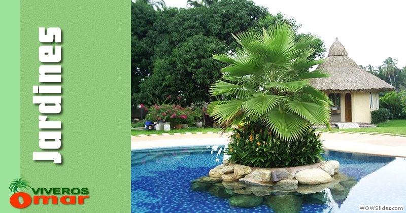 plantas tropicales en acapulco viveros en acapulco