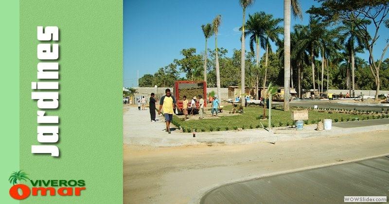 Plantas tropicales en acapulco viveros en acapulco for Vivero online mexico