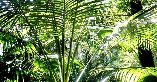 plantas ex ticas en acapulco plantas tropicales en