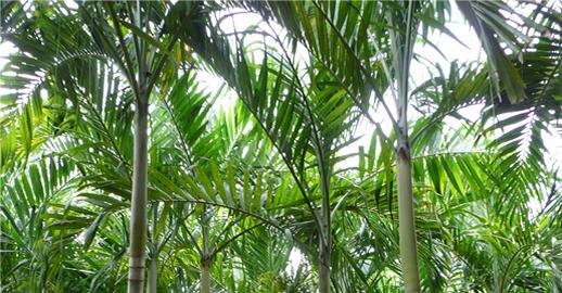 Viveros en acapulco viveros omar jardines en acapulco for Vivero plantas tropicales