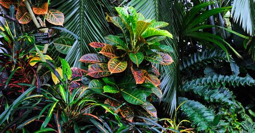 Viveros en acapulco viveros omar jardines en acapulco for Viveros de plantas de ornato